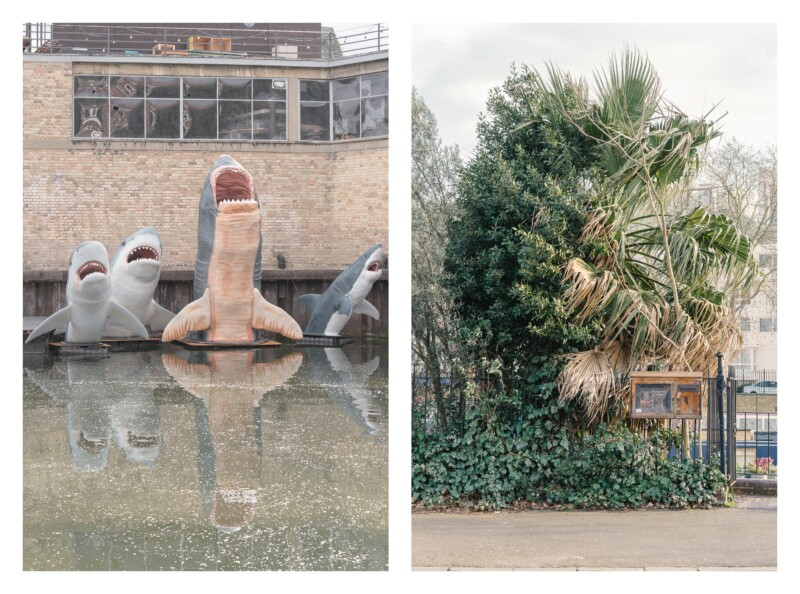 images of a palm plant on the edge of a park and an image of several model sharks in a pond