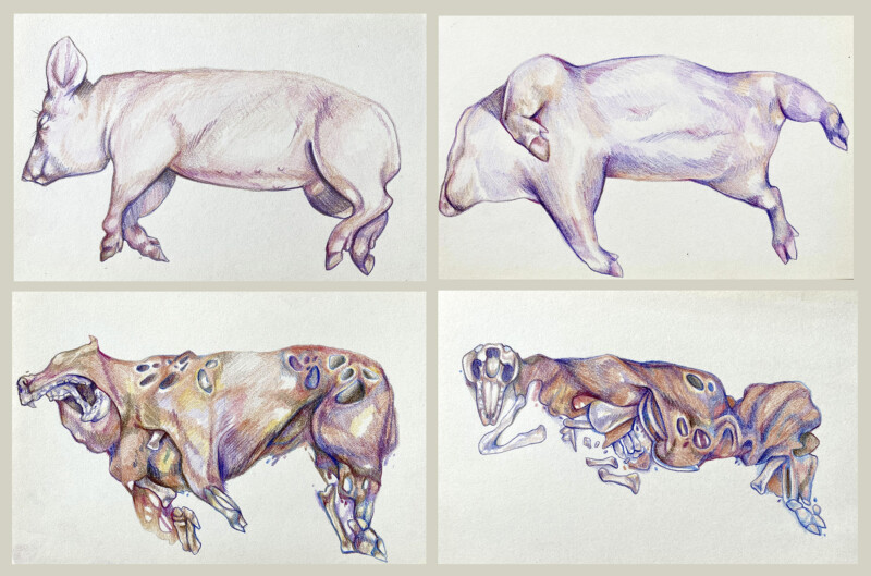 Painting of a pig carcass in different states of decay