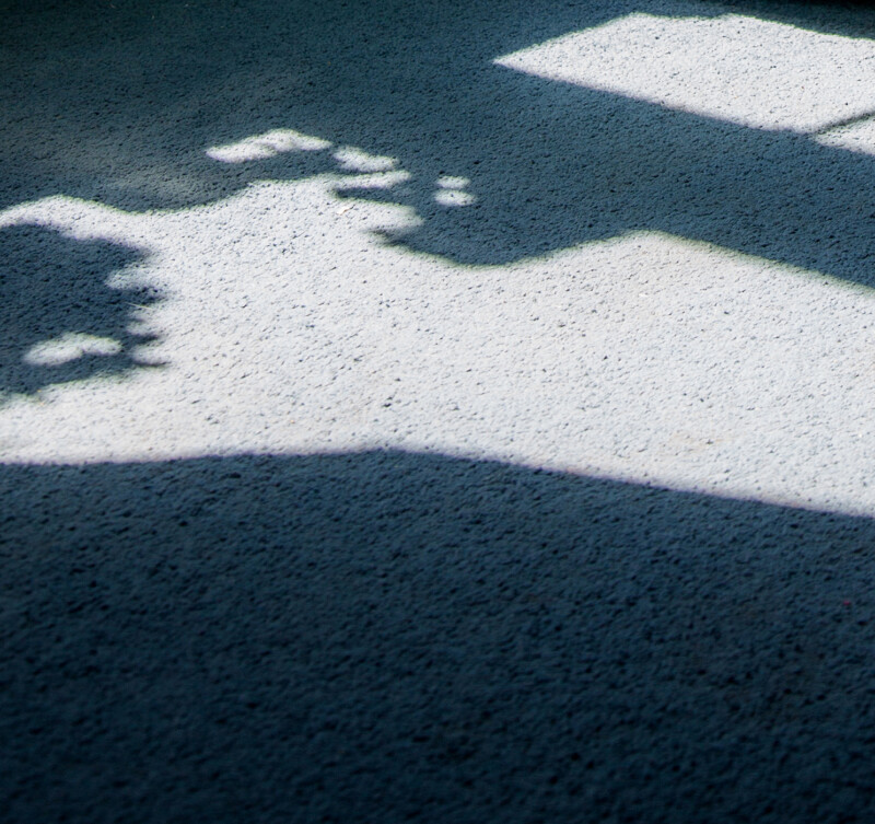 Photo of sunlight and shadows on a carpeted floor