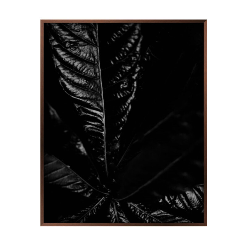 Dark photographic image of leaf forms.