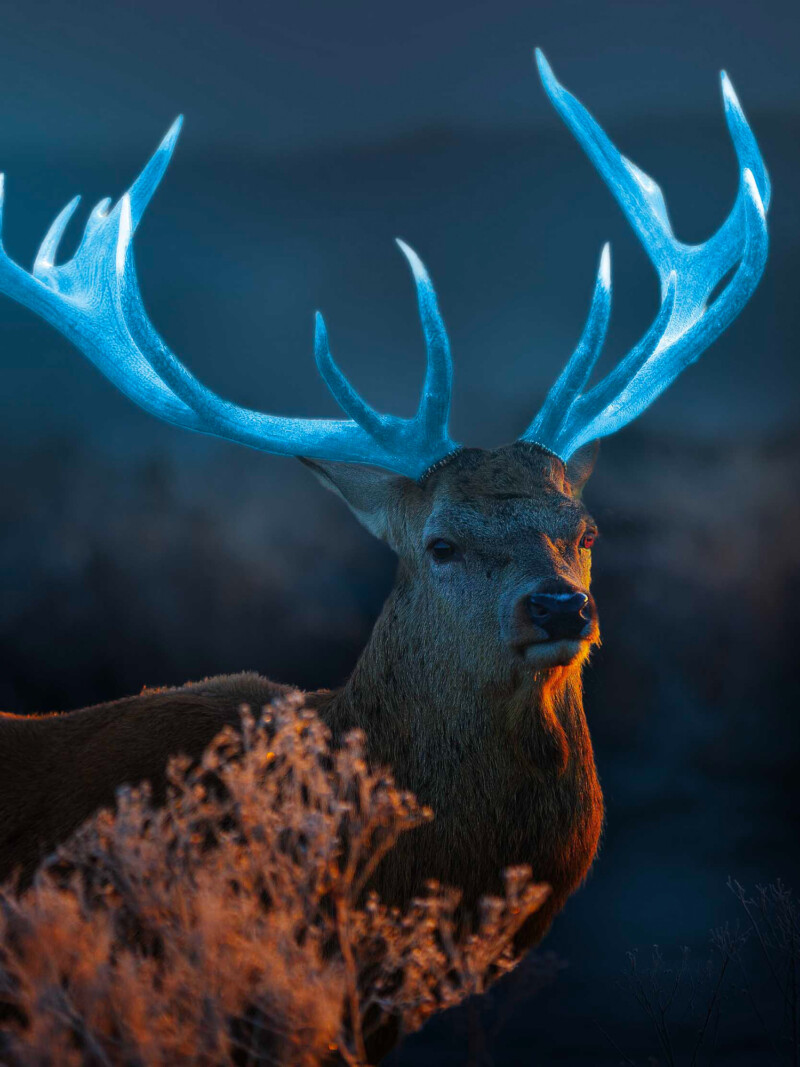 deer with glowing horns